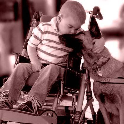 Cani per Disabili Motori