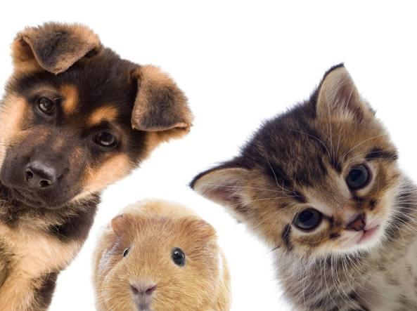 Cane gatto e porcellino d'india per la Giornata Internazionale dei diritti sugli animali