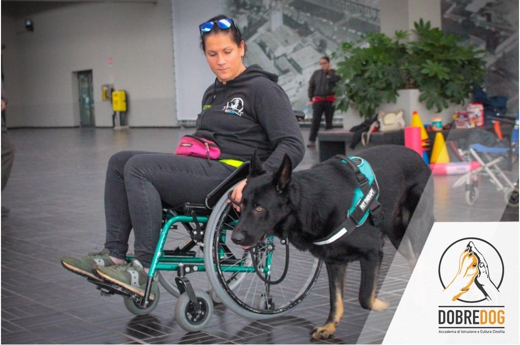 Esercitazione durante il corso di Istruttore cani per disabili motori