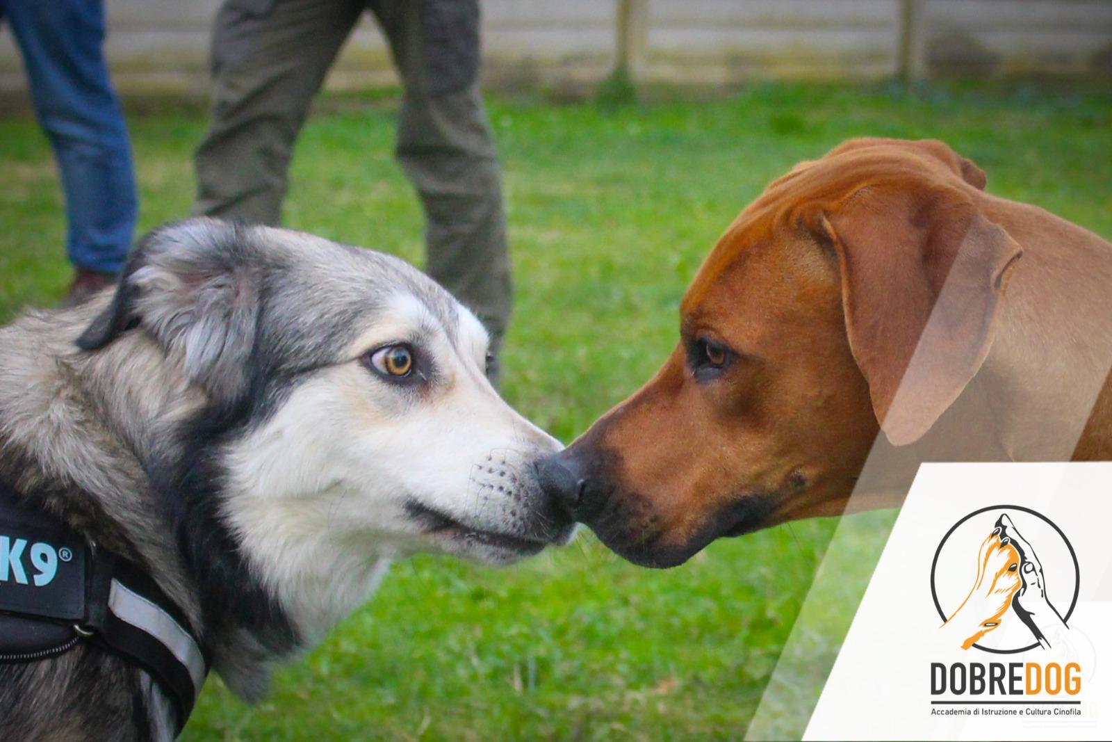Classi di Comunicazione del cane