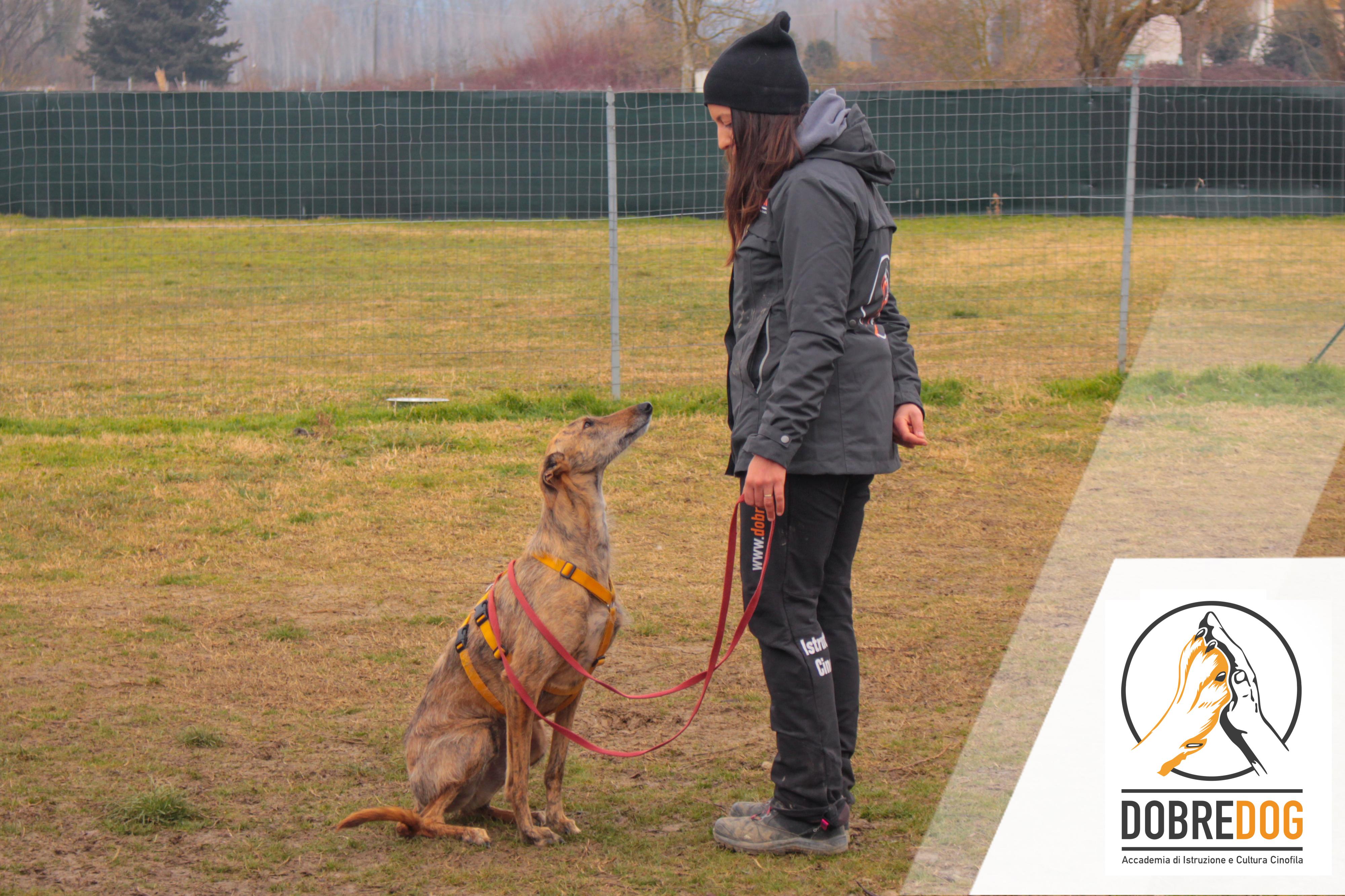 Istruttrice cinofila del Centro Cinofilo Dobredog con un cane Levriero durante le classi di lavoro