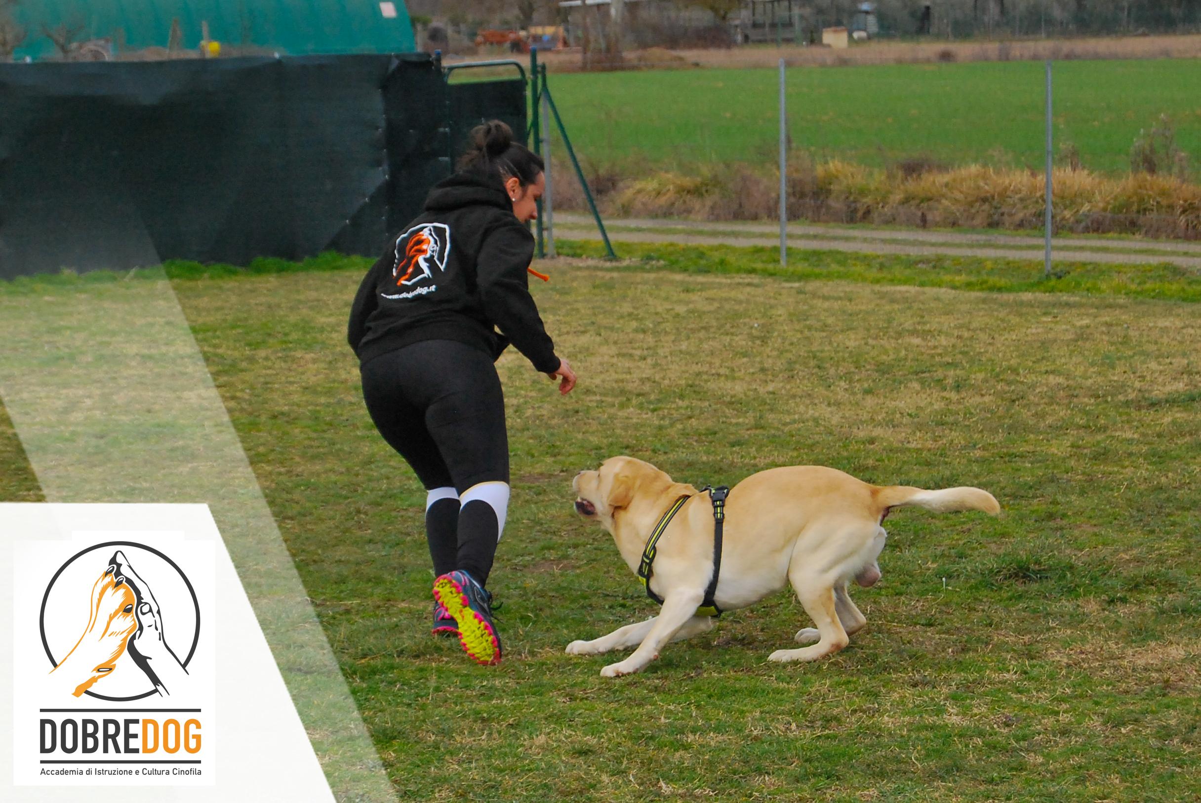 Signora e il suo cane che giocano durante il seminario gioco e motivazione svoltosi presso il centro cinofilo dobredog