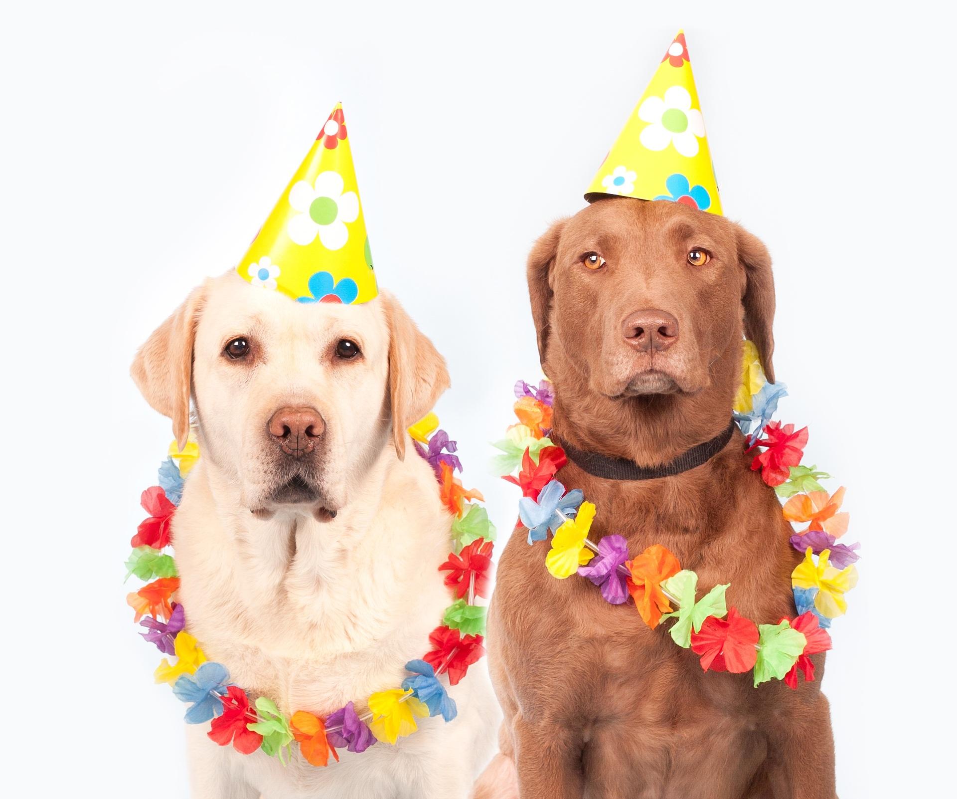 Cani addobbati a festa per carnevale