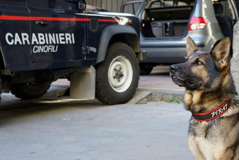 unità cinofila carabinieri