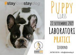 Puppy class, educazione per il cucciolo, al centro cinofilo Dobredog di Livorno
