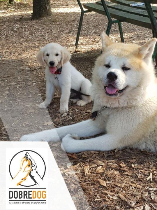 Educare un cucciolo di cane
