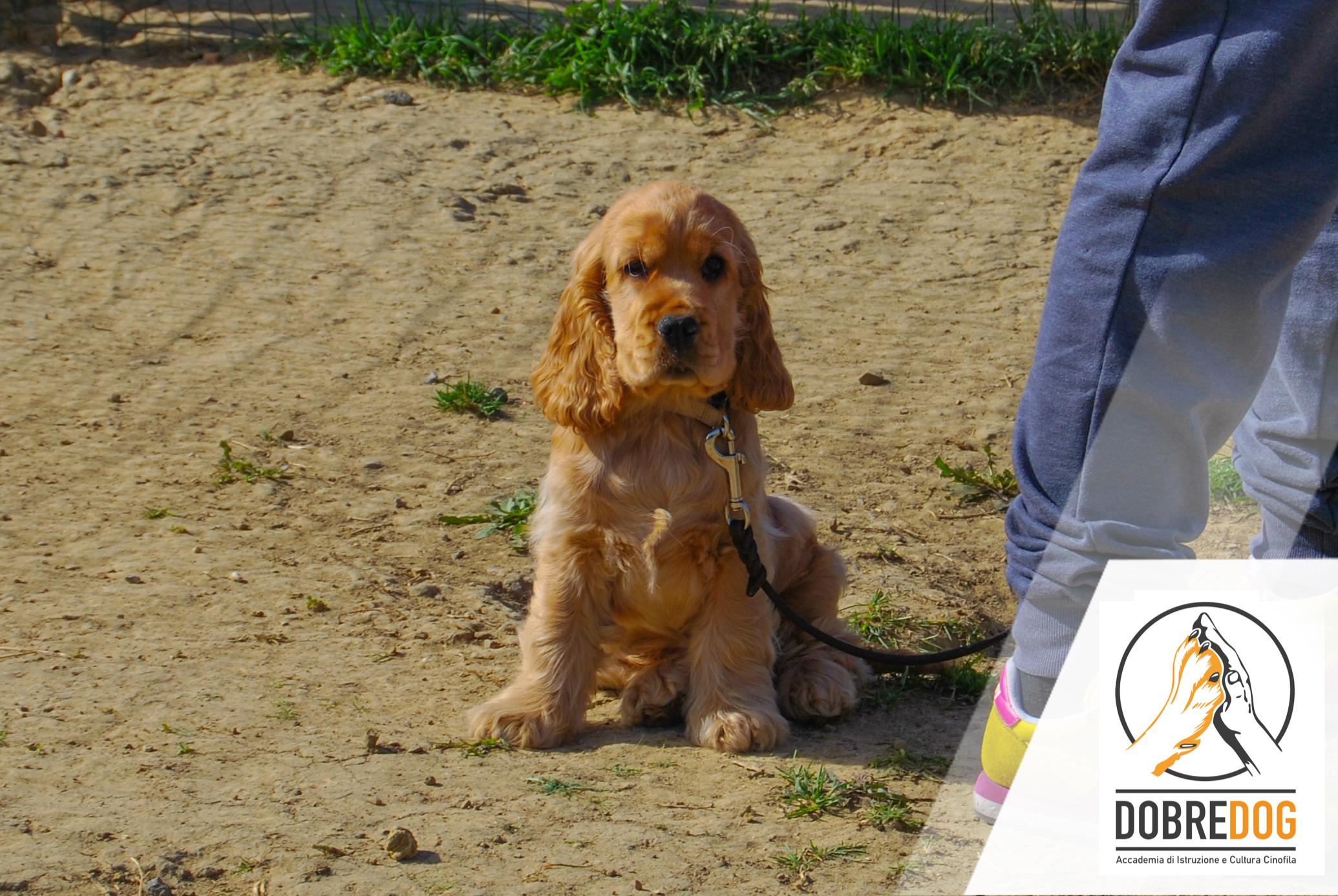 Puppy Class - Educazione cinofilo per Cuccioli al Centro Cinofilo Dobredog di Livorno