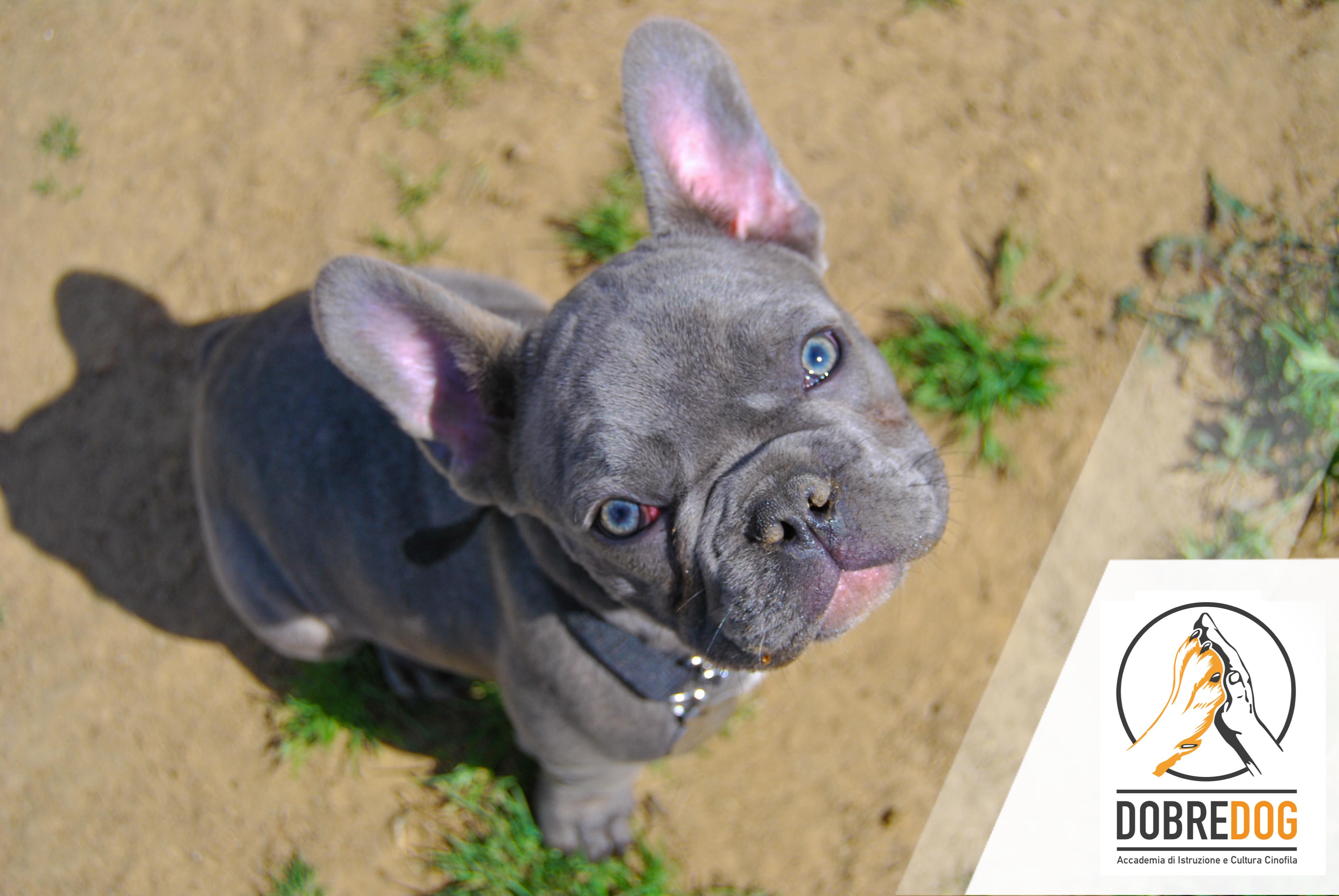 Puppy Class al centro cinofilo Dobredog Livorno