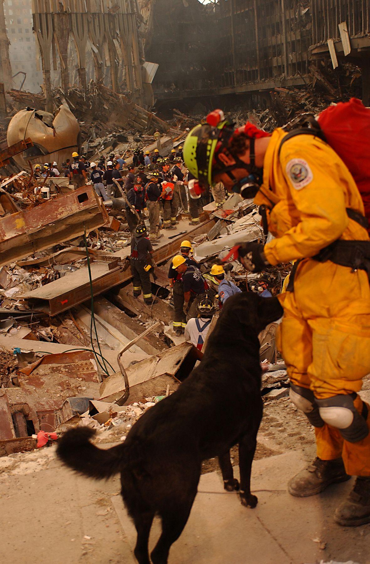 i cani dell'11 settembre