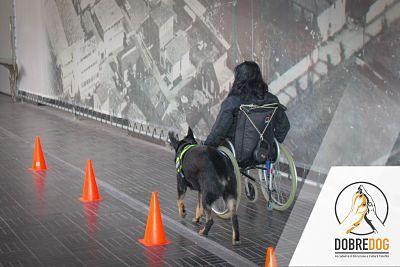 Cani d'assistenza per disabili motori