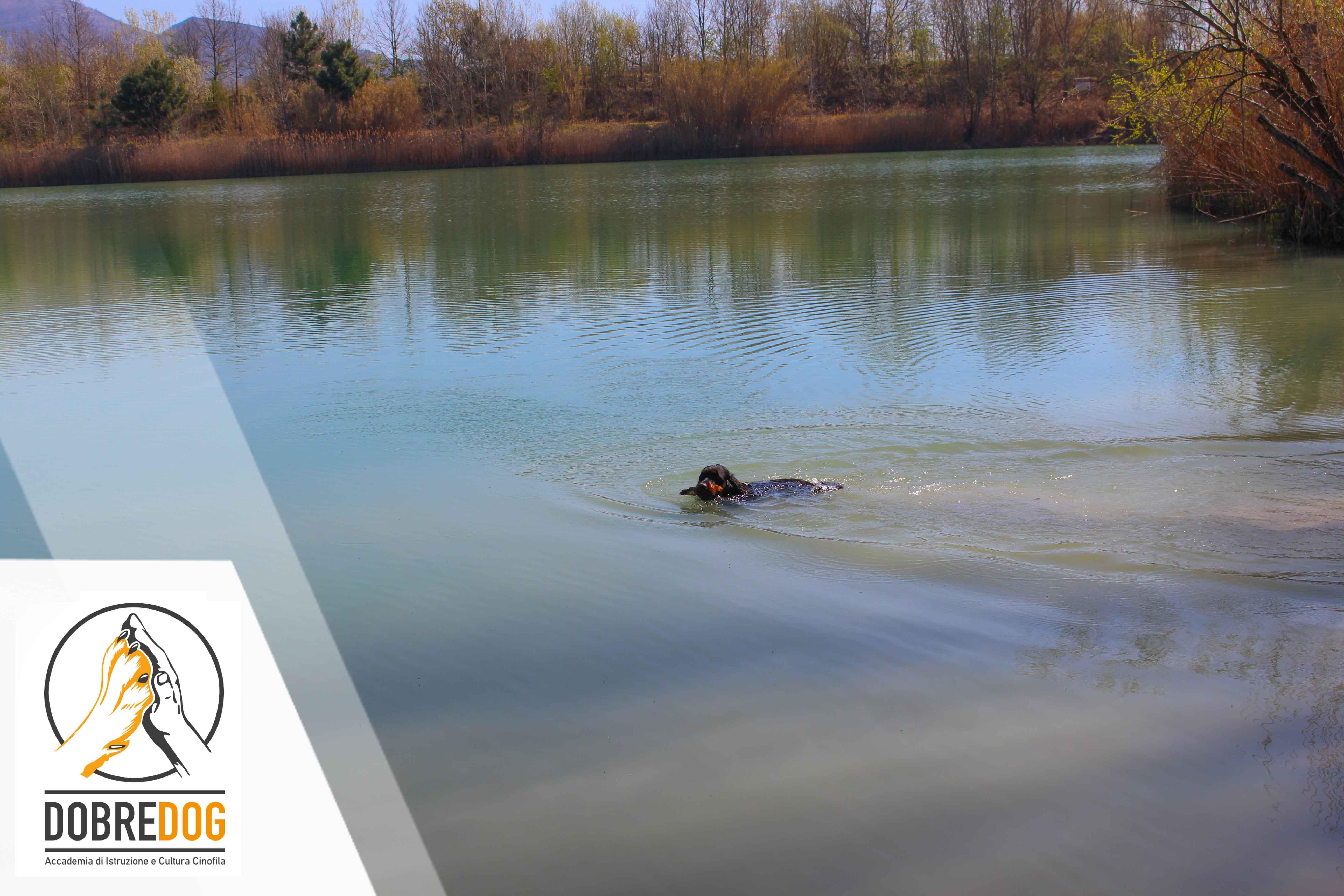 Passeggiate organizzate con il cane - Centro Cinofilo Dobredog Livorno