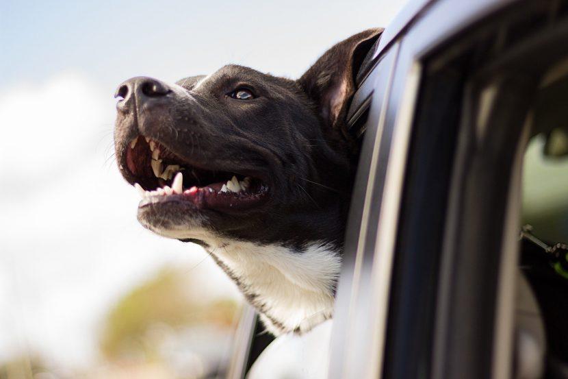 Passeggiate e giochi con i cani durante il coronavirus