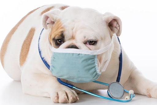 cane infetto da coronavirus