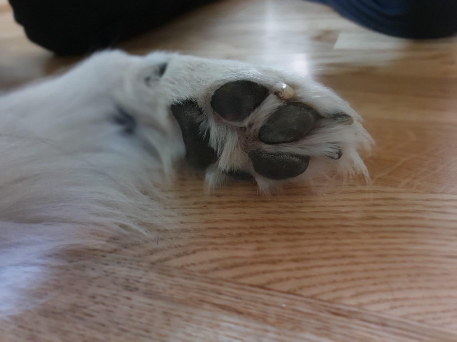 varechina per disinfettare le zampe dei cani