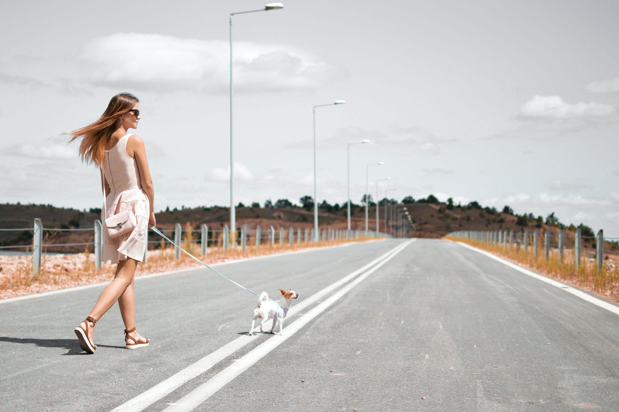 Le nuove abitudini sul Covid 19 come si riflettono sui nostri cani