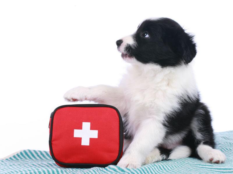 operatore cinofilo primo soccorso al cane