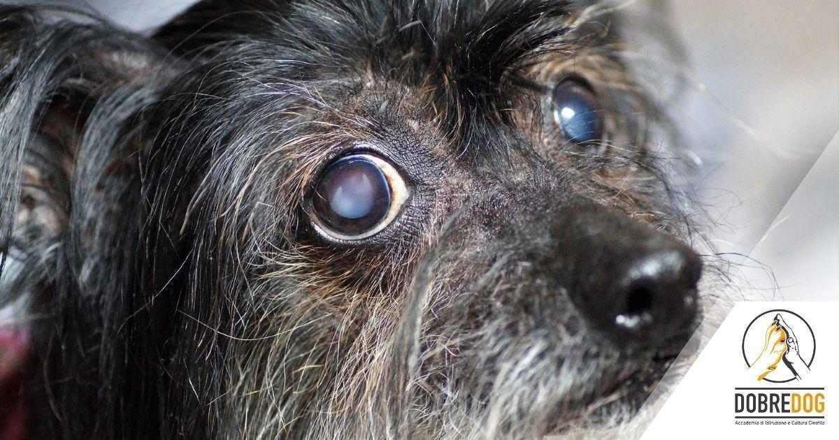cane cieco
