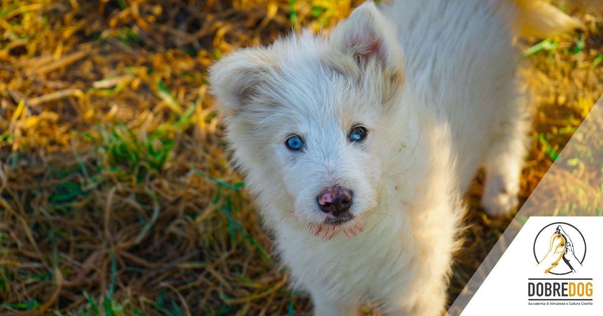 cane disabile cieco e sordo