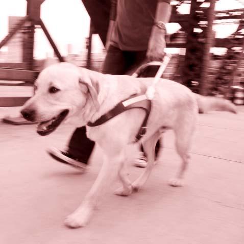 Cani Guida per Ciechi