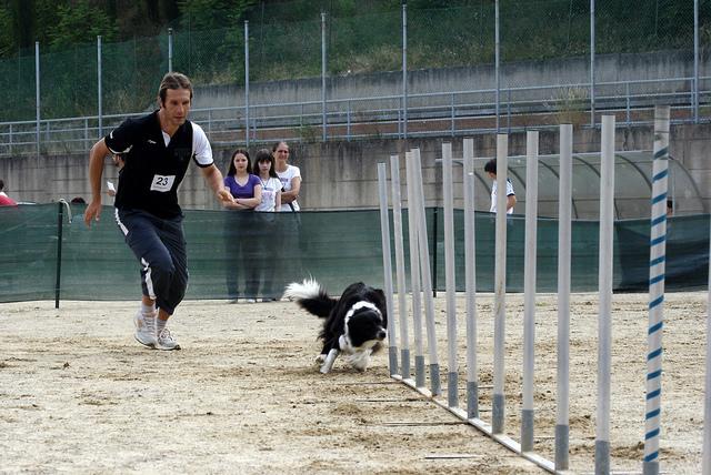 Tecnico Agility Dog