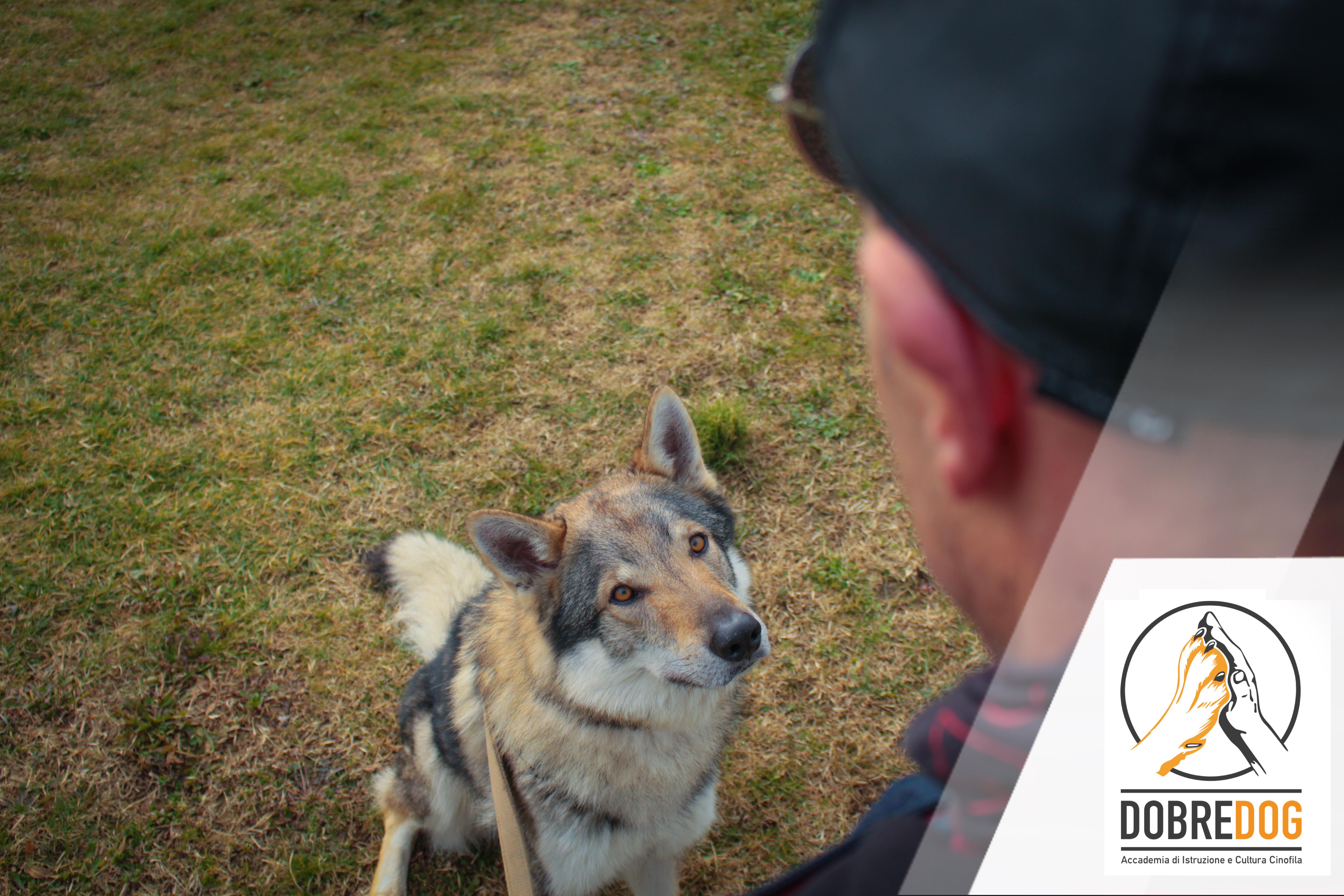 Come calmare un cane iperattivo | Animali dal Mondo