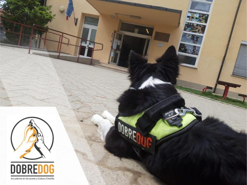 Border Collie davanti alla scuola per il progetto pet therapy, IAA, interventi assistiti sugli animali nelle scuole del Centro Cinofilo Dobredog