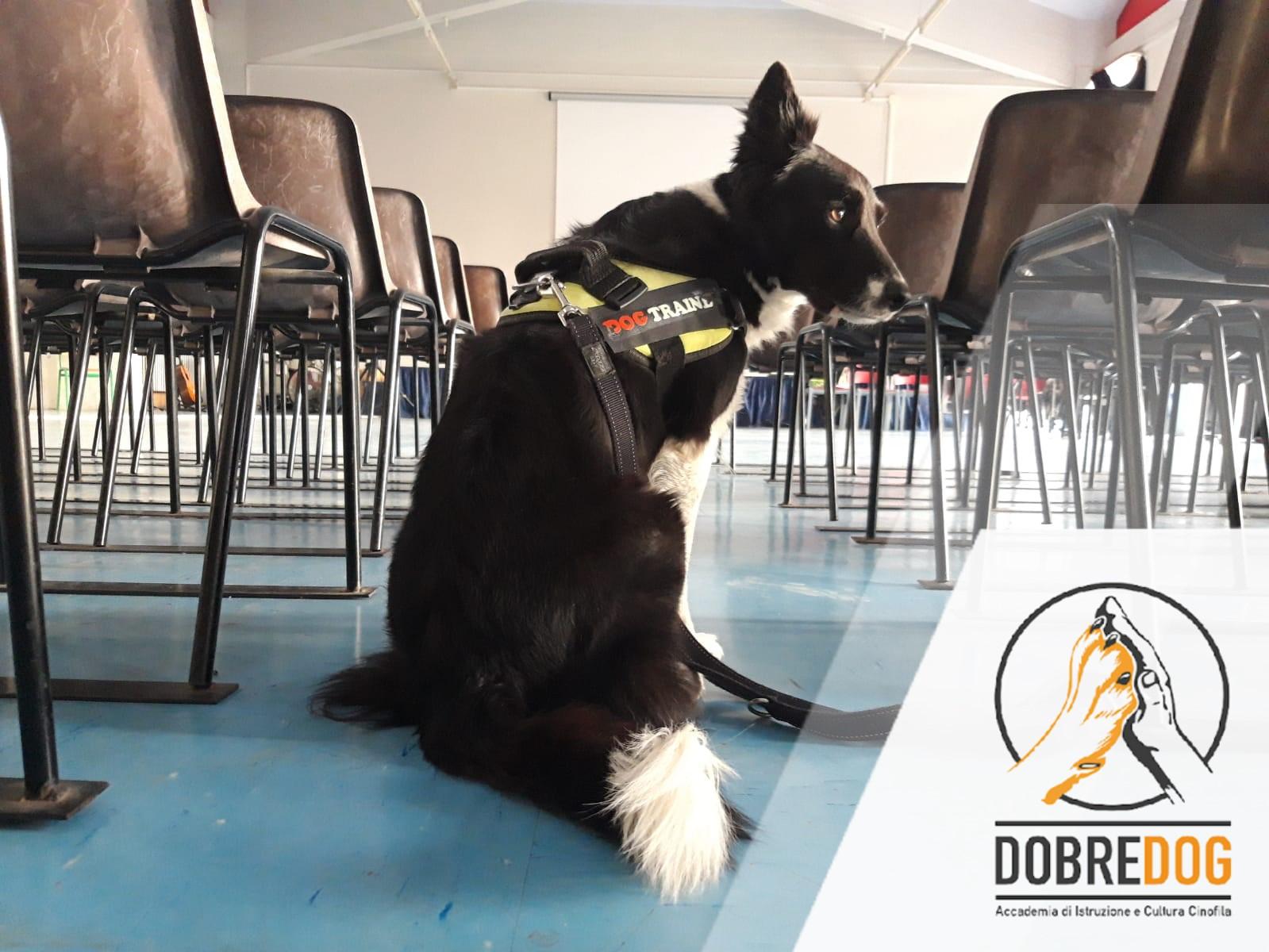 Progetto scolastico con cani e bimbi Bullismo Capannoli - Scuola San Pietro Belvedere
