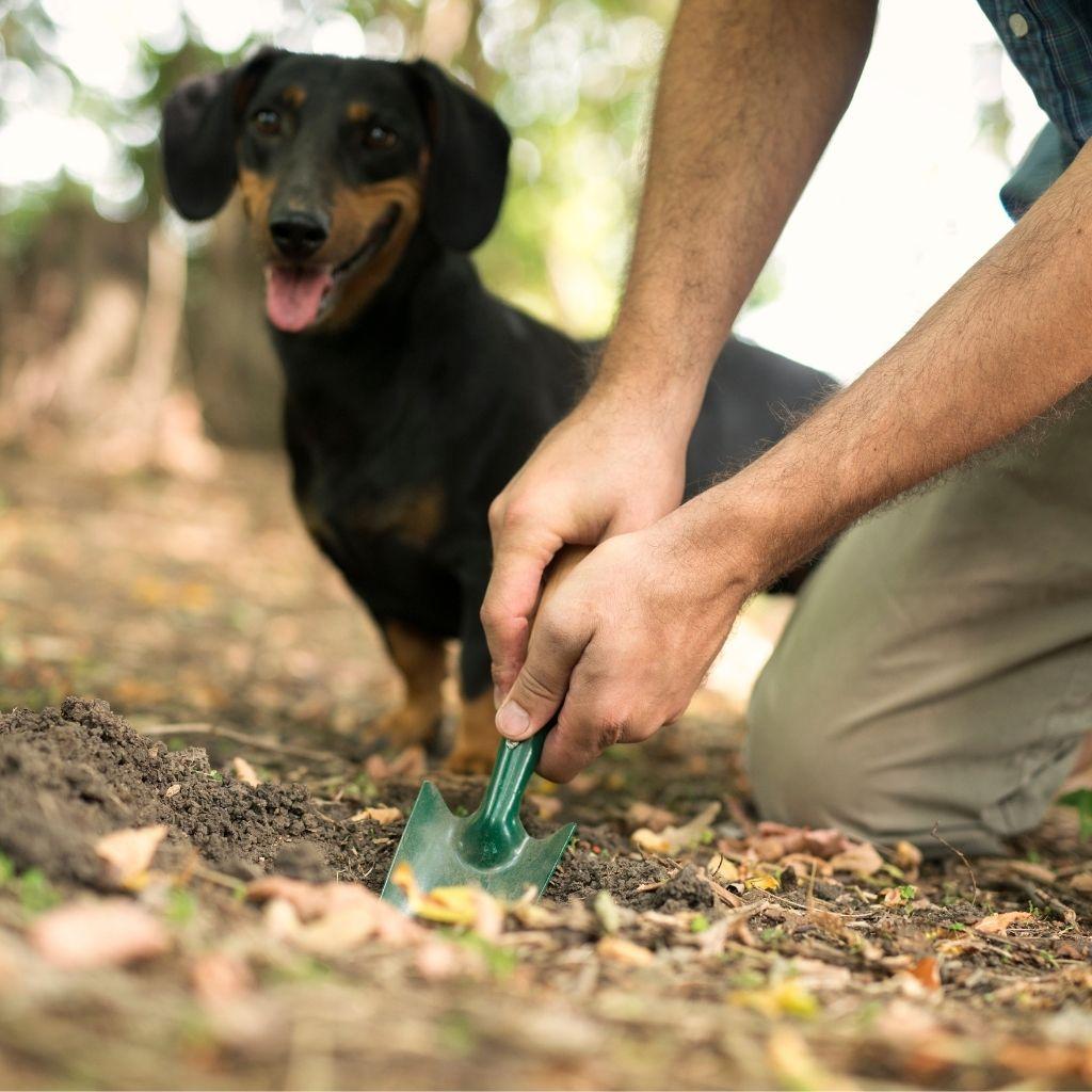 truffle tartufo sportivo cane