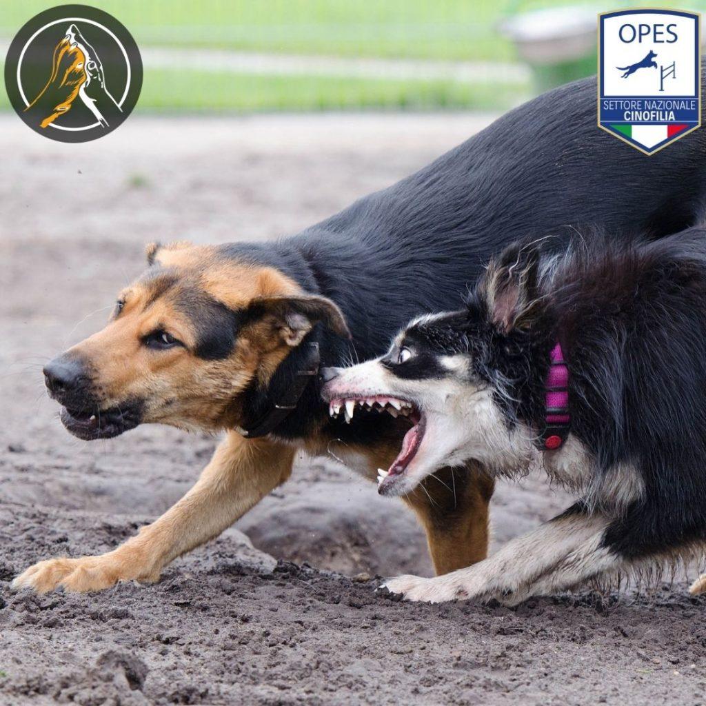 Tecnico in Riabilitazione Comportamentale del Cane Modena